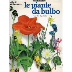 Riconoscere le piante da bulbo for Piante da bulbo